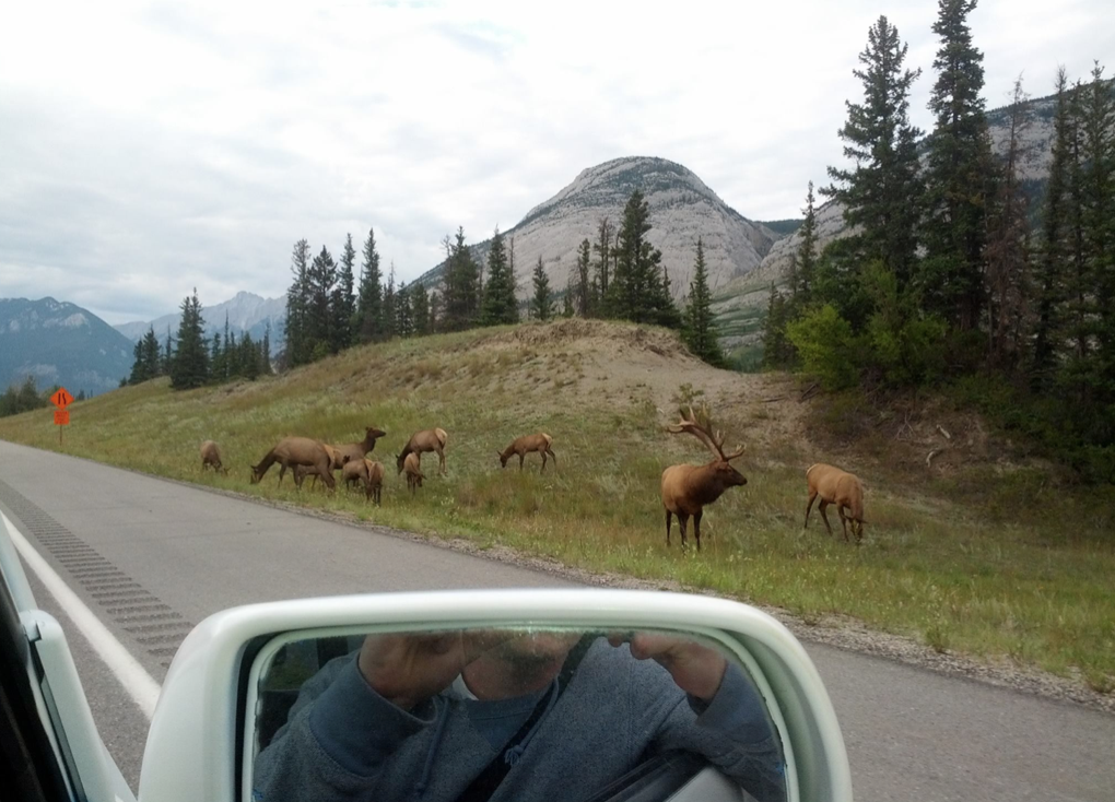 Mobilizers spotting elk on the way to their cool jobs in Valemount, British Columbia.